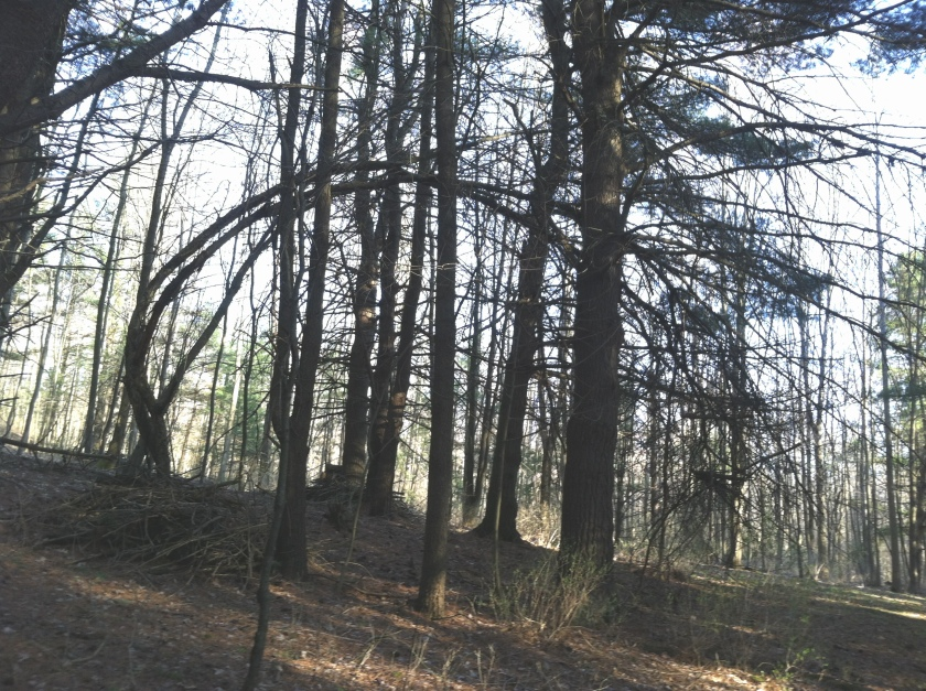 tree2a